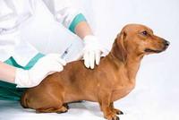 Вакцинация собак, кошек, хорьков, кроликов.  Цена от 150 руб./шт.до 900 руб./шт.  Купить в Омске - BLIZKO.ru.