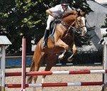 В Днепропетровске проходят соревнования по конному спорту (ФОТО)