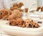 Гигиена вашего домашнего животного
