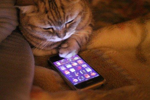кот айфон
