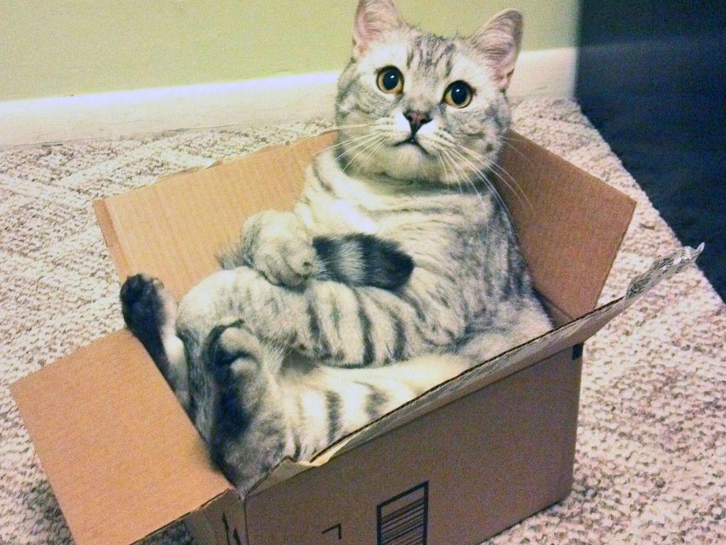 По мнению ученых, страсть к коробкам обоснована биологическими особенностями кошек.
