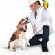 Требуются сотрудники в ветеринарную клинику на Рабочей