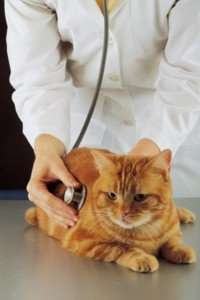 animals-at-the-vet