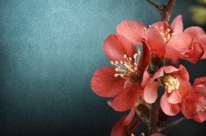 flowers-770__1461145338__615