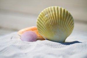 shells-massage-therapy-sand-large