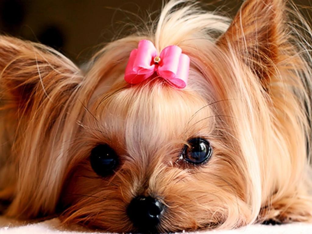 diferentes-sitios-venta-perros-L-wwR1Lo