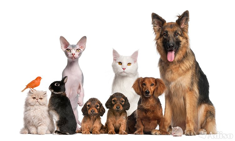 veterinarnye-uslugi-veterinarnaya.0.b