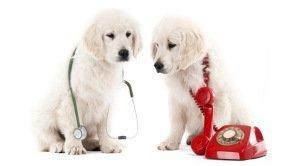 veterinana-izsaukums-uz-majas