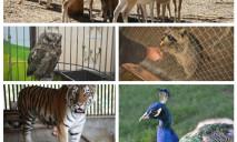 Где в Днепре работают зоопарки