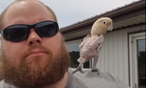 Попугай без перьев собрал 42 миллиона просмотров за танцы с хозяином