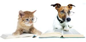 ветеринарная-офтальмология