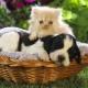 Стерилизация домашних животних