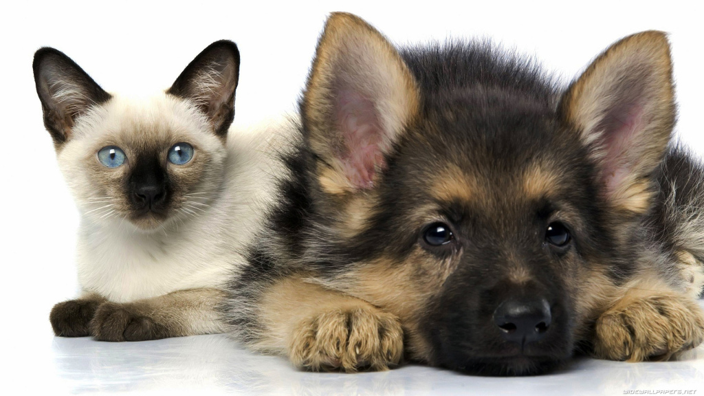 cat-and-dog-1920x1080-010