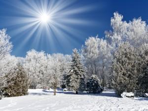 winter-landscapes_00428014