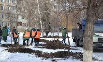 Коммунальщики Днепра вышли сажать деревья в декабре