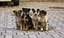 Жителей Днепра призывают поддержать ужесточение наказания за жестокое обращение с животными