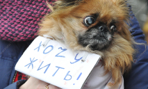 В центре Днепра требуют ужесточить наказание за жестокое обращение с животными