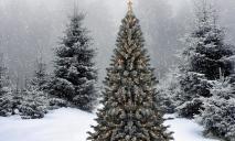 Как проверить законность новогодней елки?