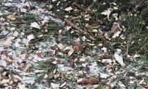 В Днепре показали, куда уходят елки после праздников