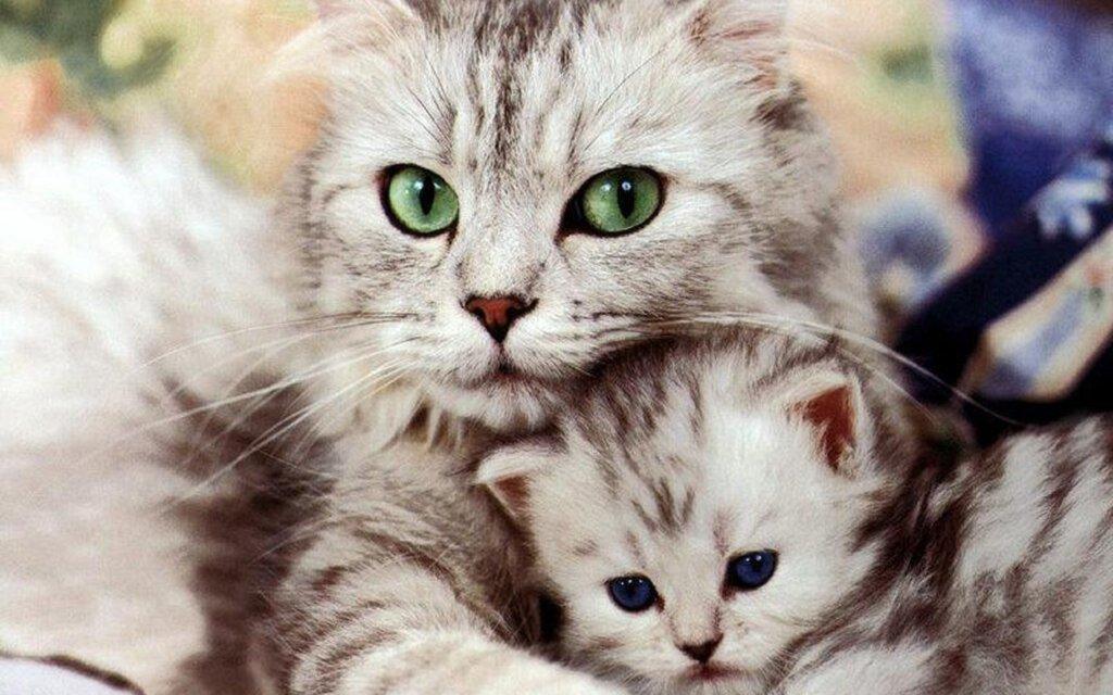 кошка-и-котенок