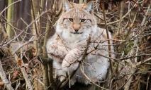 В Украине ужесточат охрану краснокнижных животных и растений