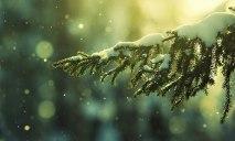 Жители Днепра предпочли на Новый год покупать живые деревья в горшках