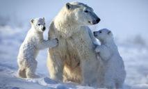 «Белый медведь» вместо «Синего кита»: появилась альтернатива смертельной игре