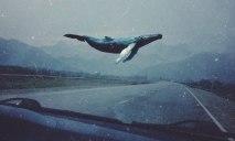 На Днепропетровщине рассказали, как не стать жертвой «Синего кита»
