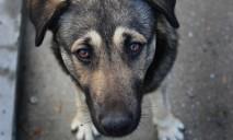 В Днепре работают уникальные мини-приюты для бездомных животных
