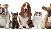 Внимание владельцам домашних животных: горсовет выдал постановление