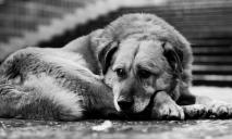 Как чувствует себя найденный на мусорке в Днепропетровщине породистый пес