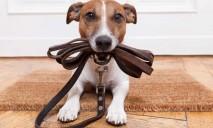 Полиция Днепра будет следить за тем, чтобы владельцы собак убирали за своими питомцами