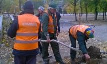 «Зеленстрой» отказался от помощи людей