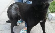 Днепровские зоозащитники обвиняют ветеринара в издевательстве над животными