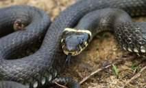 По улицам Днепра ползают змеи