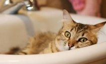 Где в Днепре завтра, 30 мая, отключат воду?