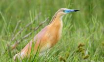На Днепропетровщине замечена очень редкая птица