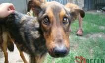 Приют «Пегас» пополнился милым псом