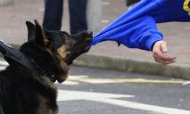 Нападение собак на людей: какие штрафы владельцам и как получить компенсацию
