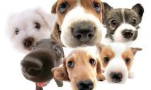 Днепрян приглашают на знакомство с приютом животных