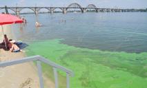 Позеленевший Днепр: «прелести» и опасности наших пляжей