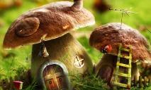 Куда днепрянам ехать за грибами?