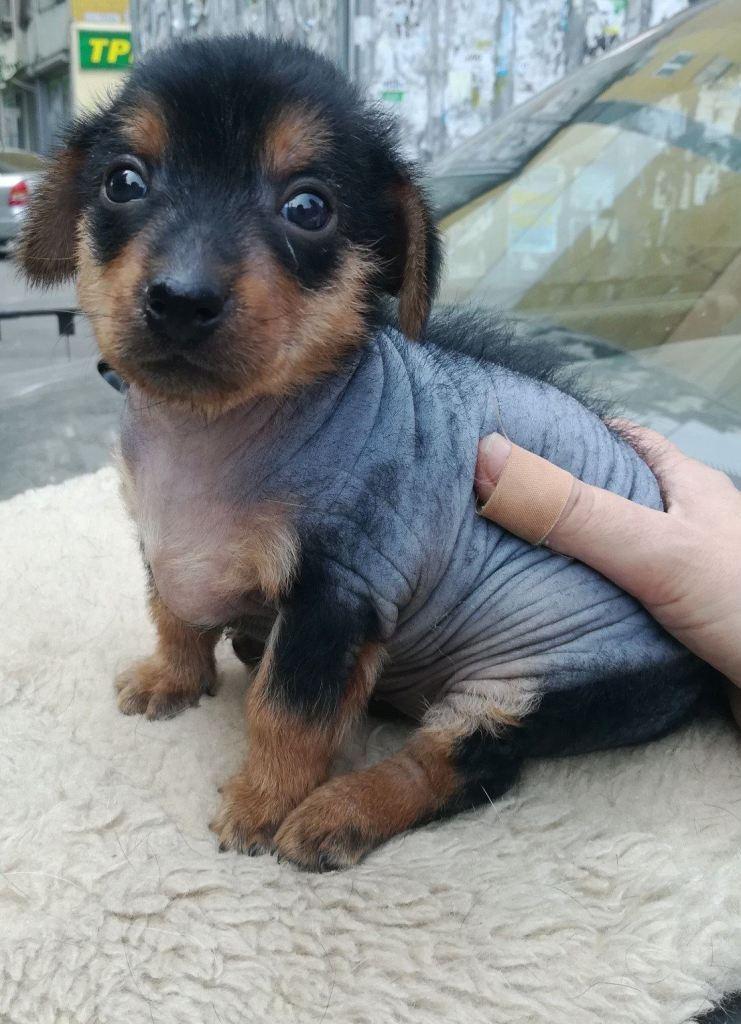 необыкновенный-щенок