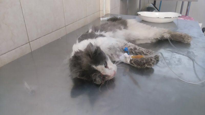 Волонтеры Днепра поросят спасти кота