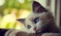 Сильно изувеченного кота спасают днепровские волонтеры