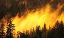 300 тысяч квадратных метров леса сгорело сегодня в области