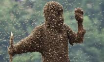 Местные врачи советуют: что делать при укусе пчелы