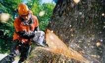 В Днепре ведется срез аварийных деревьев