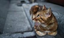 Доброта против жестокости: волонтеры спасли кота от гибели на железной дороге