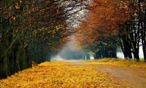 Убирать опавшие листья в Днепре незаконно